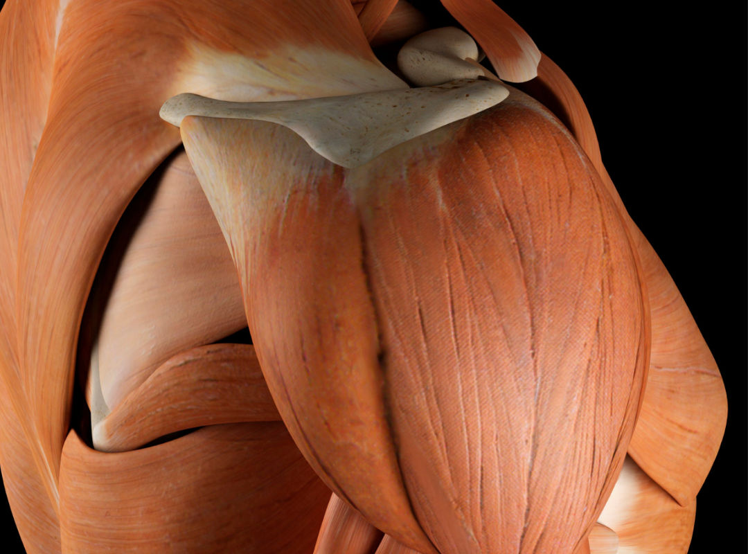 RAAC - réhabilitation améliorée de l'épaule après chirurgie au Médipôle de Savoie